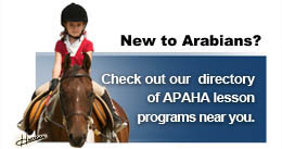 New To Arabian Horses?